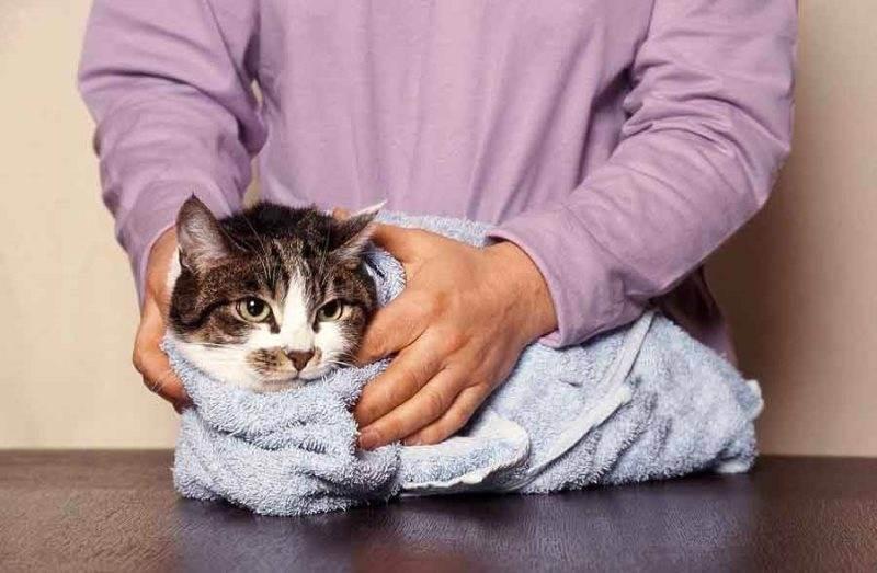 Дегтярное мыло от блох у кошек и собак