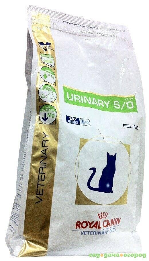 Симптомы аллергии на корм у кошек: фото, сухой корм, признаки