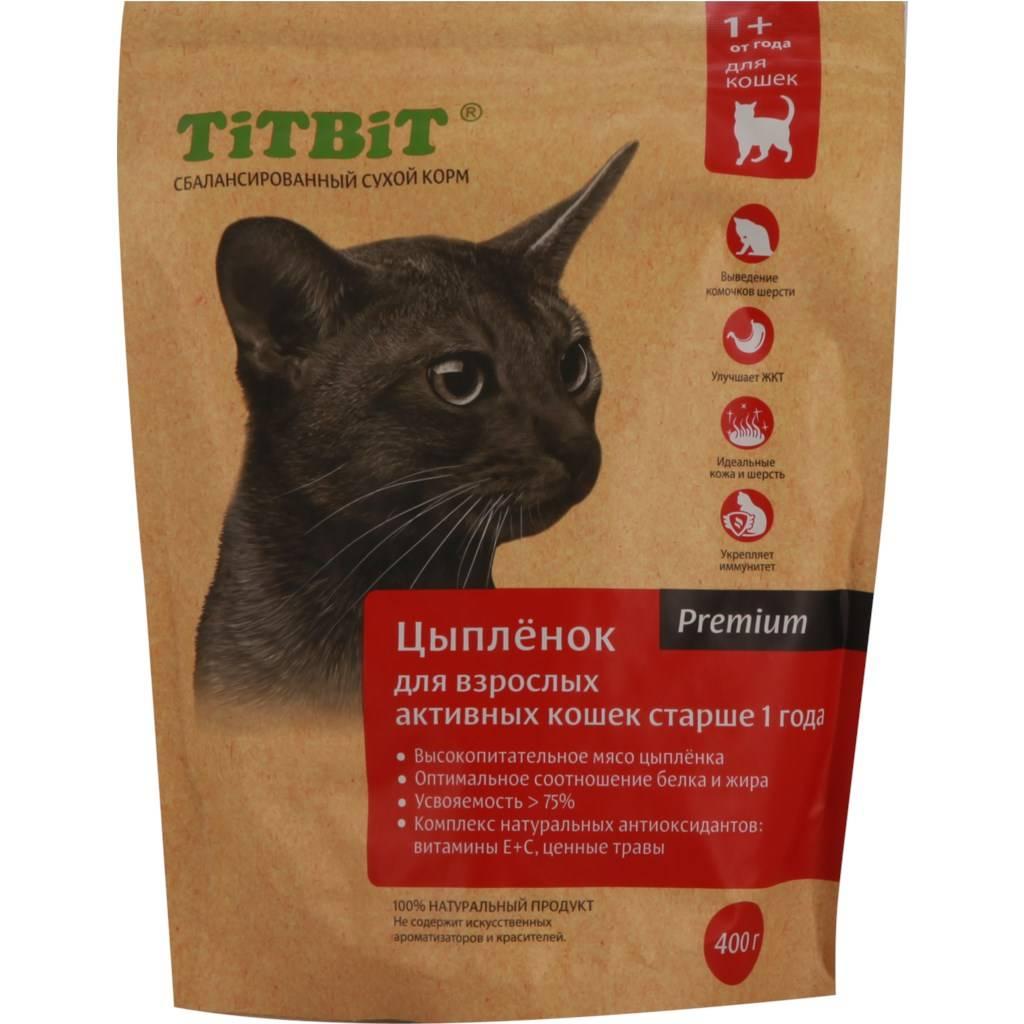 Какой корм для котят лучше: советы и рекомендации