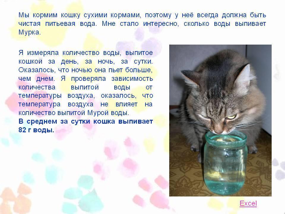 Сколько воды нужно пить взрослой кошке?