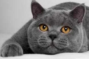 Аллергия на кота? - запись пользователя а* (kisylyakisa) в сообществе детские болезни от года до трех в категории аллергия - babyblog.ru