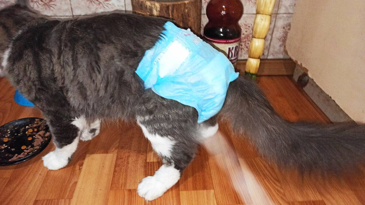 «антисекс» для кошек: инструкция, можно ли давать, аналоги препарата