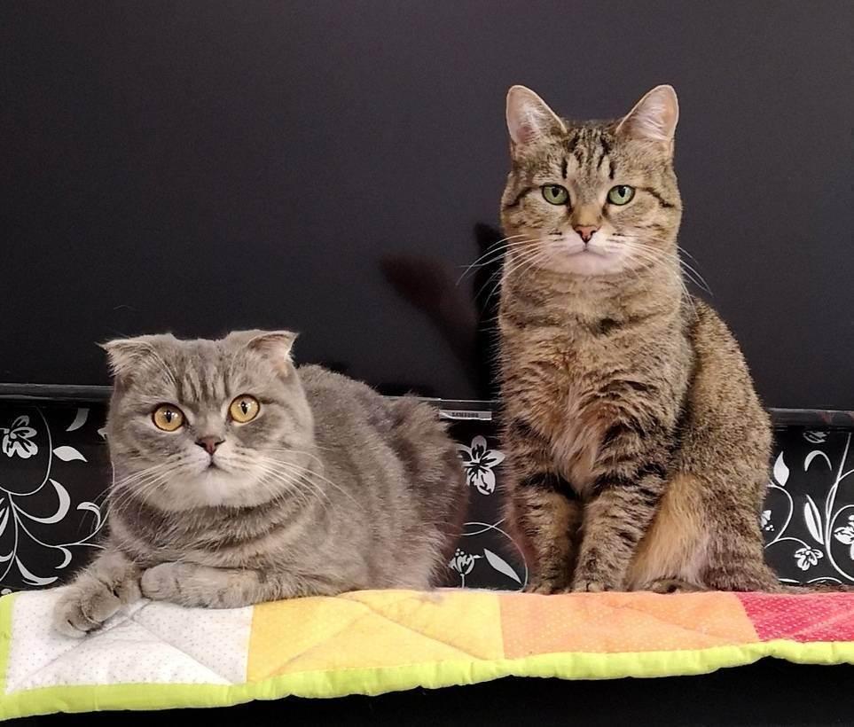Сонник уродливые кошки. к чему снится уродливые кошки видеть во сне - сонник дома солнца