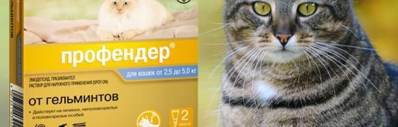 """Препарат """"профендер"""" для кошек от паразитов – правила применения"""