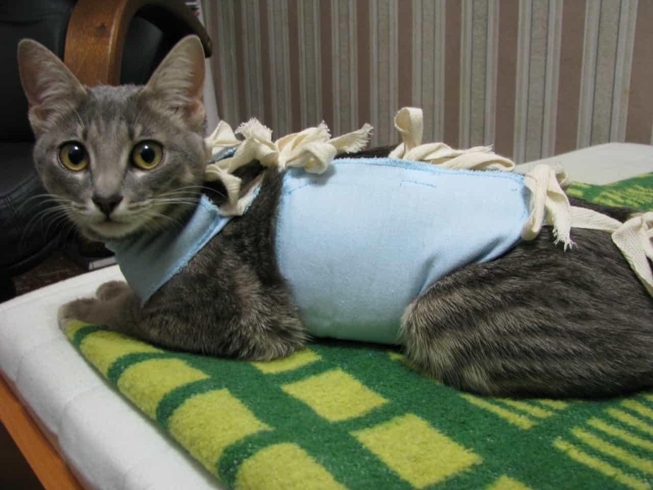 Кошка после стерилизации. есть вопросы!!! - страна мам