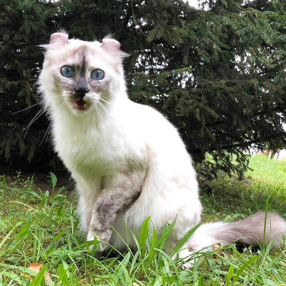 Самые необычные и экзотические породы кошек — список, характеристика и фото
