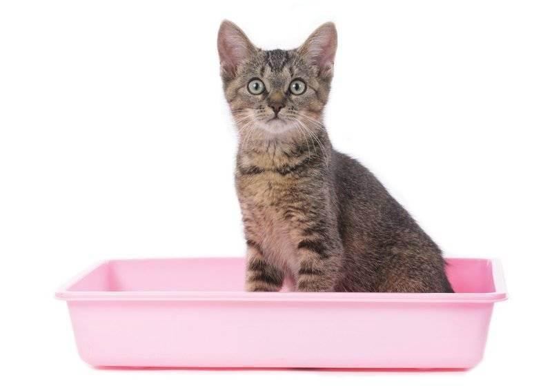 Породистые кошки