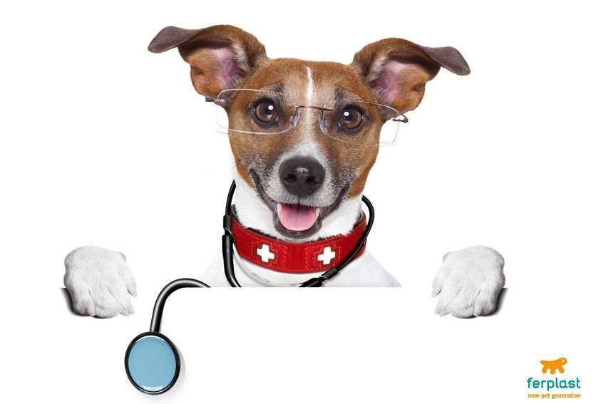 Вакцинация домашних животных: польза или вред?