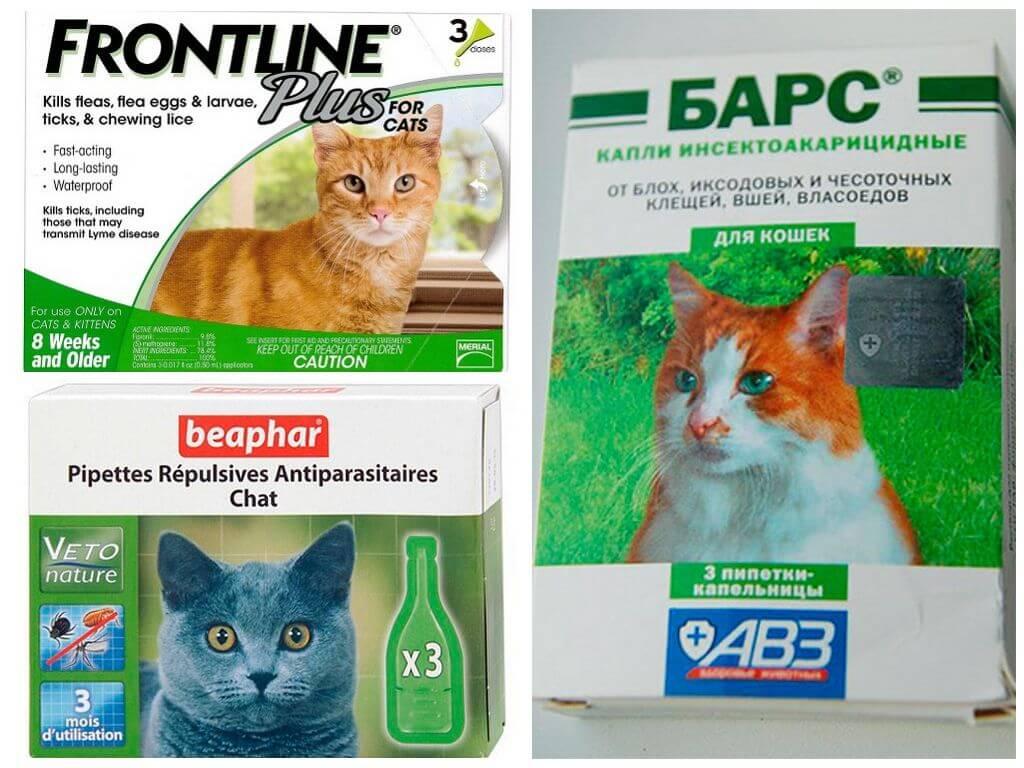 Лекарство от блох для кошек