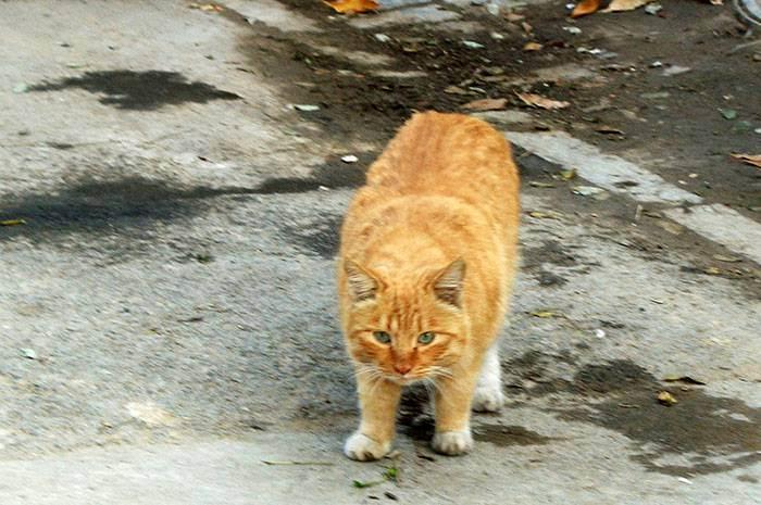 Кошка в доме — приметы и поверья