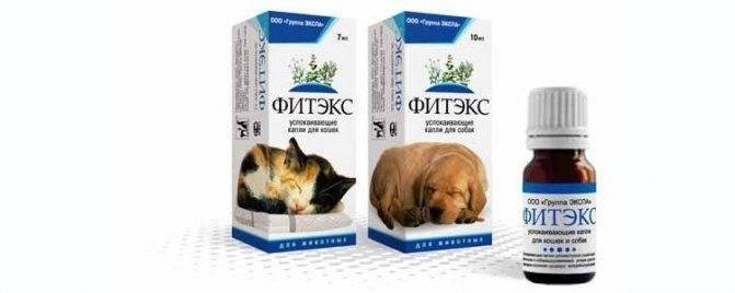 Фоспасим для кошек: состав препарата, формы выпуска, применение, дозировка, противопоказания, аналоги