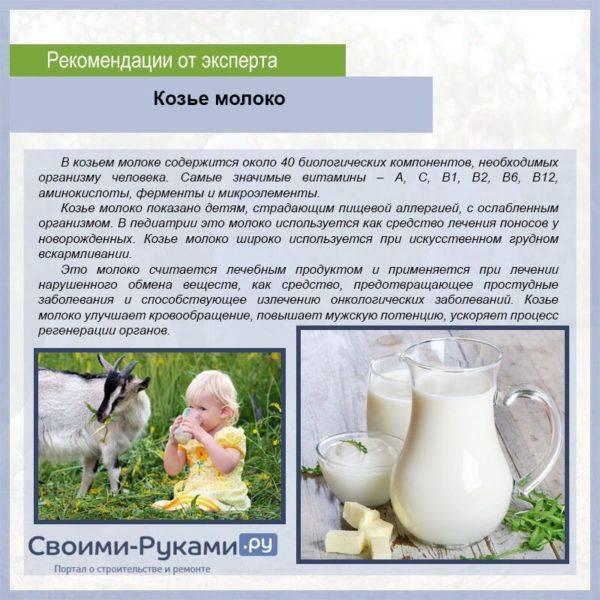 Можно ли кошкам давать молоко и молочные продукты