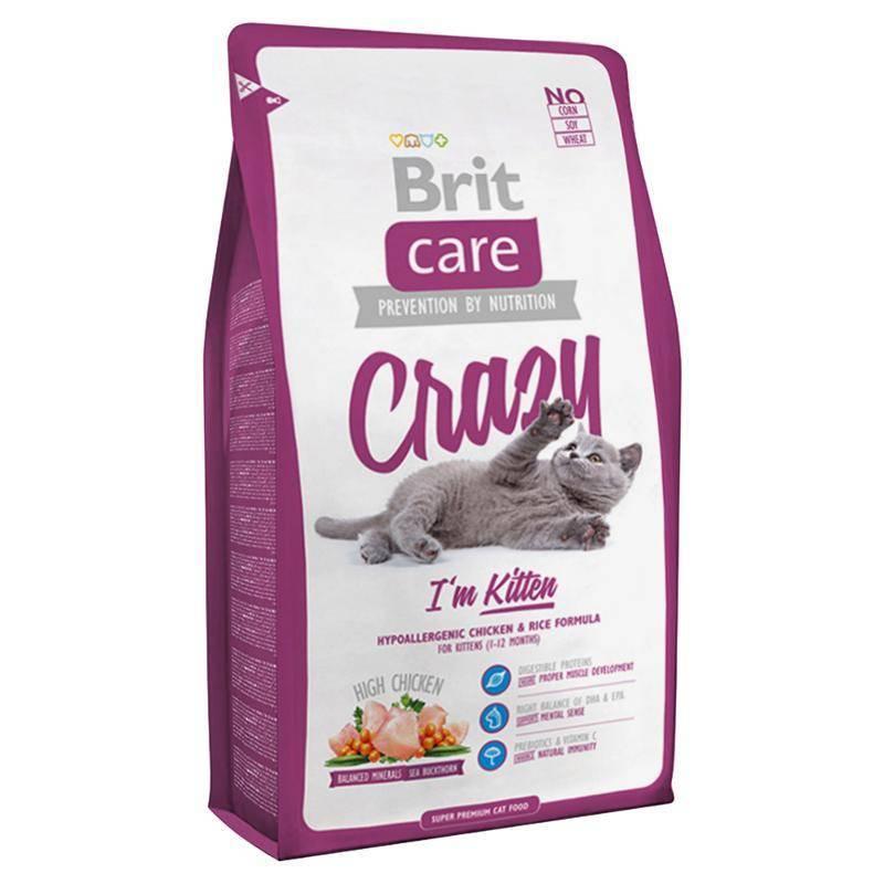 Корм для шотландских вислоухих кошек: можно ли кормить котенка сухим кормом? какой корм лучше выбрать для кота? корма премиум-класса и другие разновидности