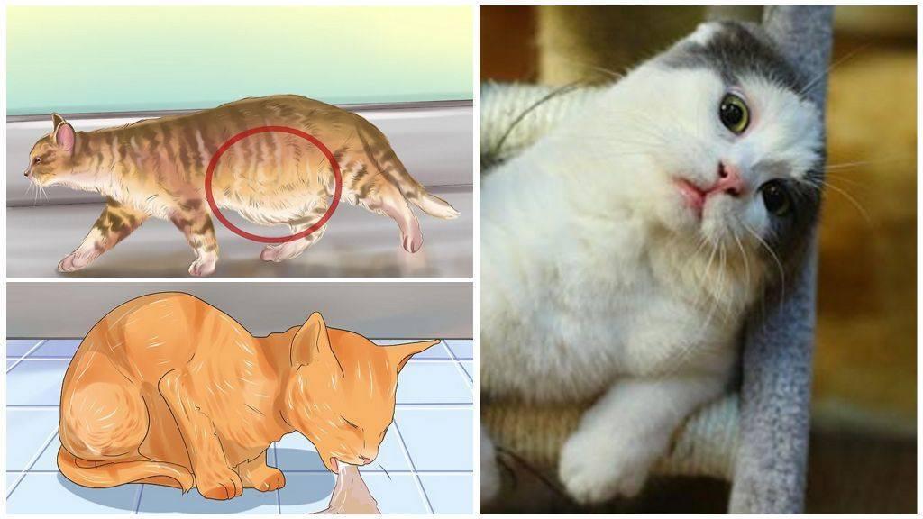 Глисты у котят - симптомы, признаки, методы лечения