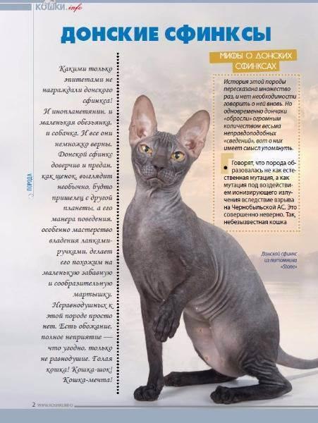 Канадский сфинкс — описание породы и характер кошки
