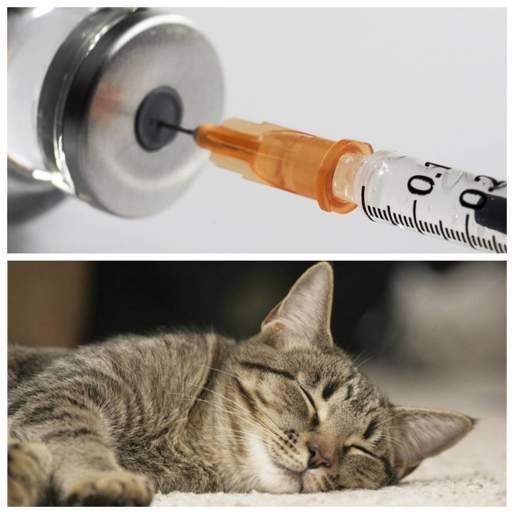 Как усыпить кошку в домашних условиях самому: показания, препараты для безболезненного усыпления