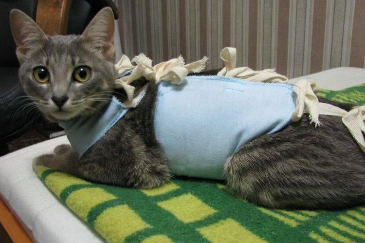 Кот после кастрации не ходит в туалет: стоит ли волноваться