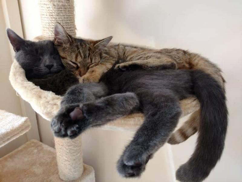 Почему котята дергаются во сне