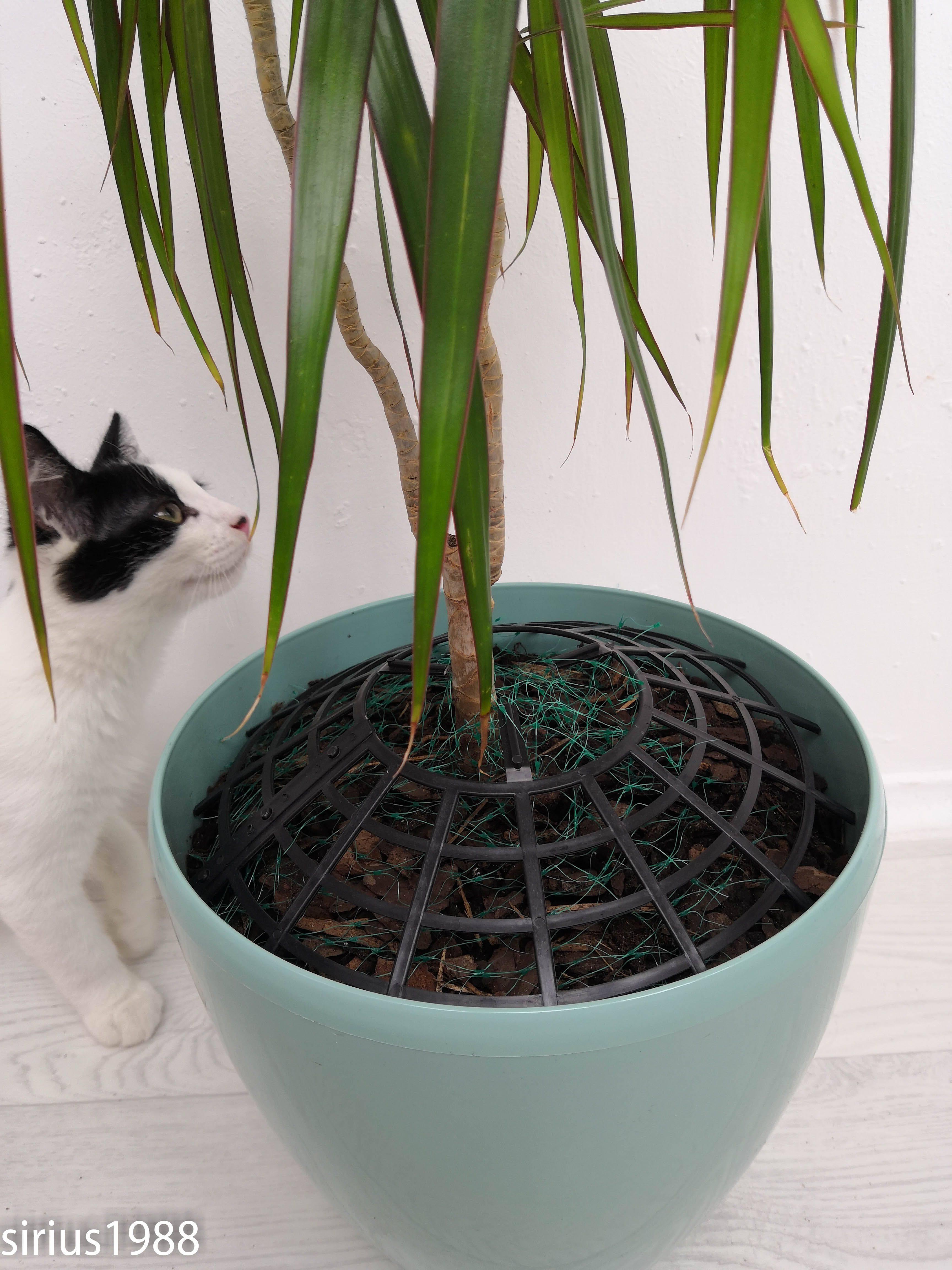 Как защитить цветы от кота - инженер пто