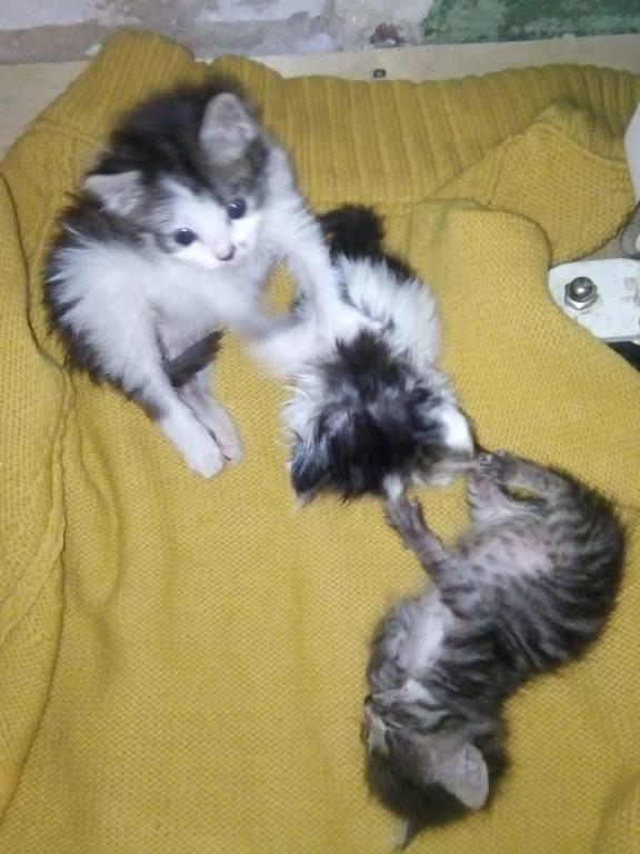 Когда котята начинают есть сами