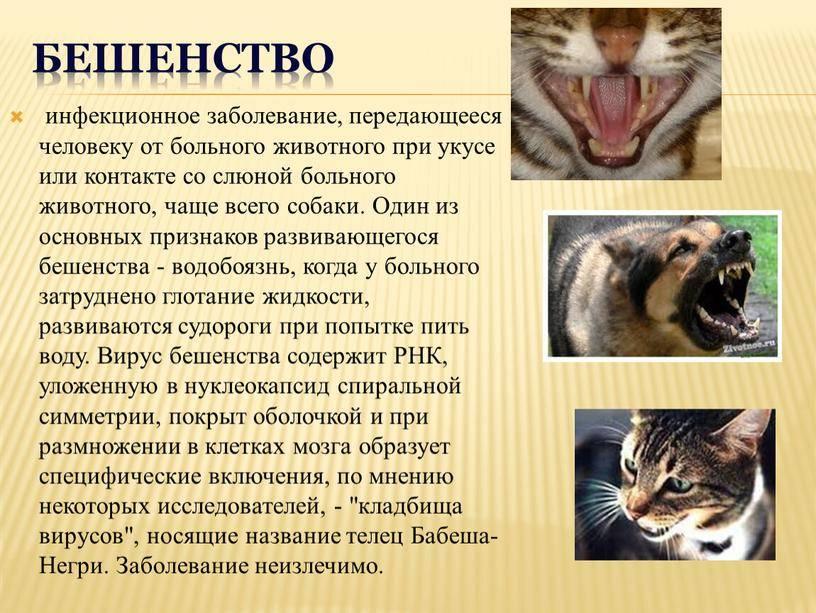 Болезнь передающаяся от кошек женщинам