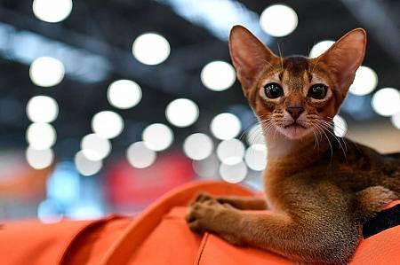 До скольки месяцев у котят меняются зубы. у котенка режутся зубы: что надо делать и что не надо