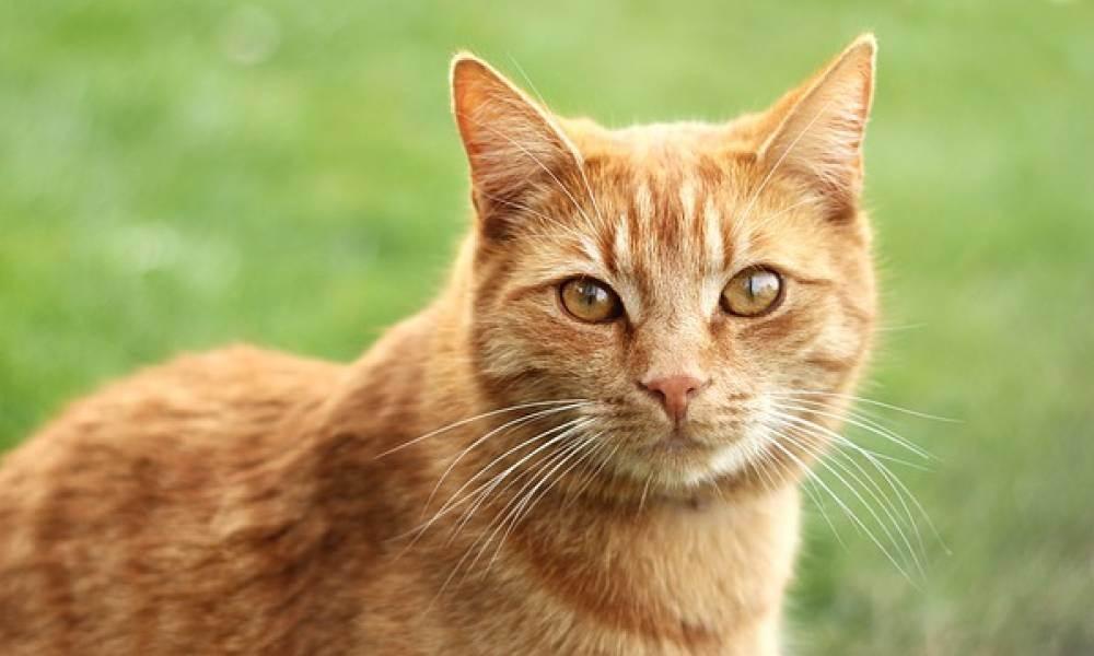 Мир в глазах любимой кошки