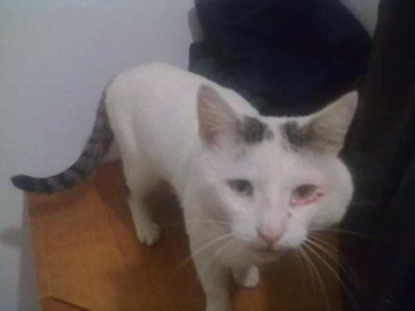 Прошу совета: у кота опухли щечки и шея