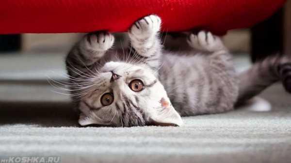 Какую обивку дивана лучше выбрать если в доме живет кот