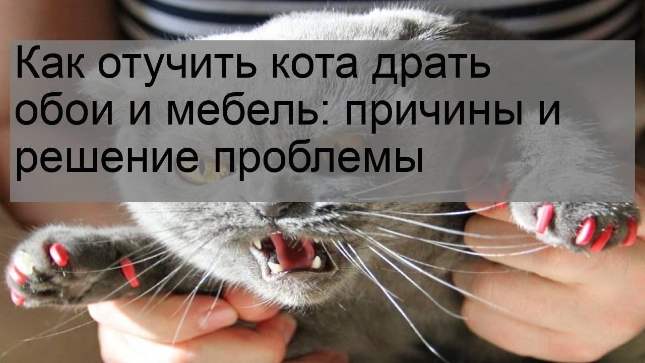 ➤ как отучить кошку драть обои и какие обои кошки не царапают, видео | мы строители ✔1