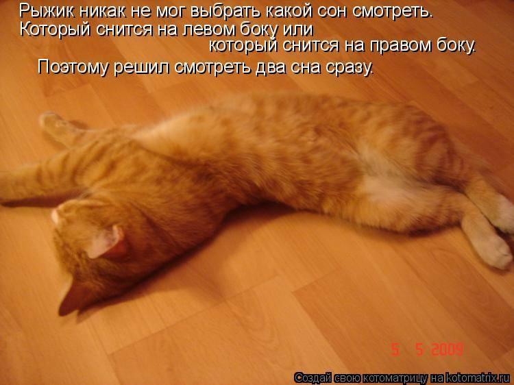 Сонник к чему снятся кошки женщине. к чему снится к чему снятся кошки женщине видеть во сне - сонник дома солнца