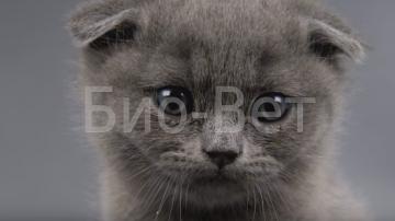 Блохи у кошек: симптомы, диагноз, как избавиться, препараты | ветеринарная служба владимирской области