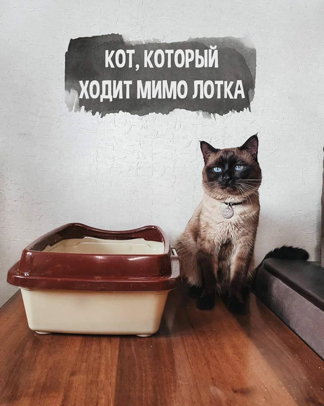 Почему кошка ходит в туалет мимо лотка?