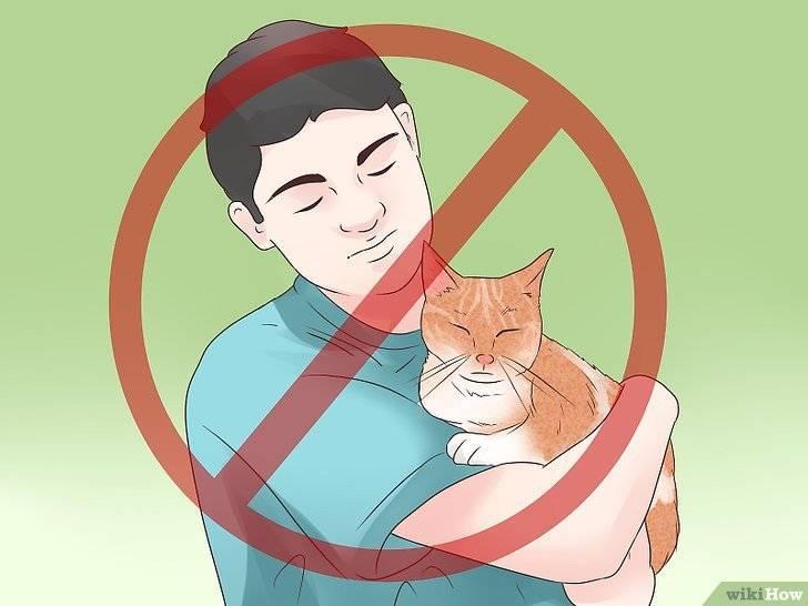 Эпилепсия у кошки. 9 основных причин возникновения