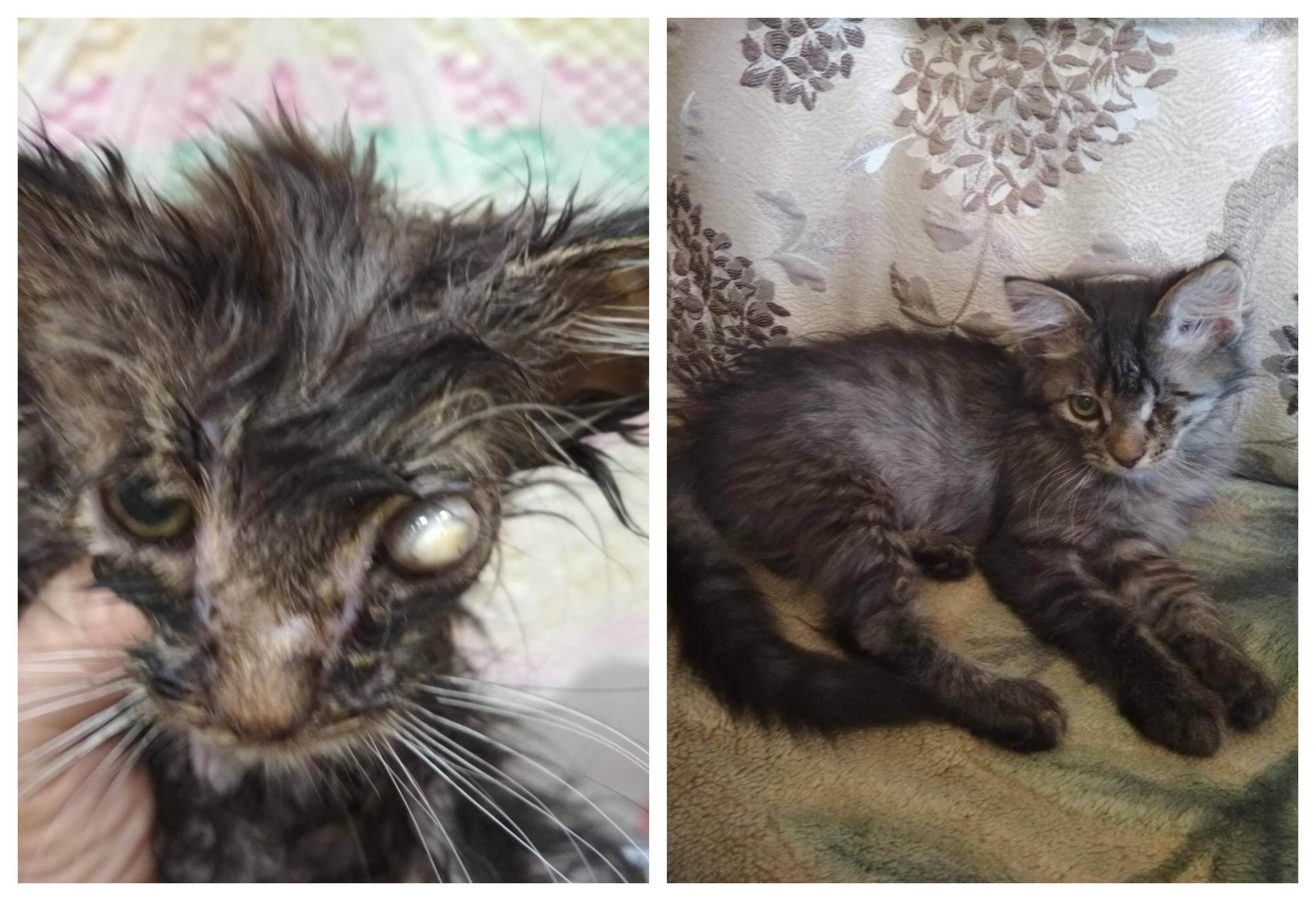 Всё о животных: помогите!!!! у нас кошка съела своих котят спустя неделю!!!