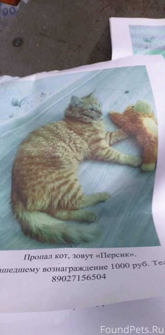 Что делать, если потерялся кот: инструкции действий в разных ситуациях