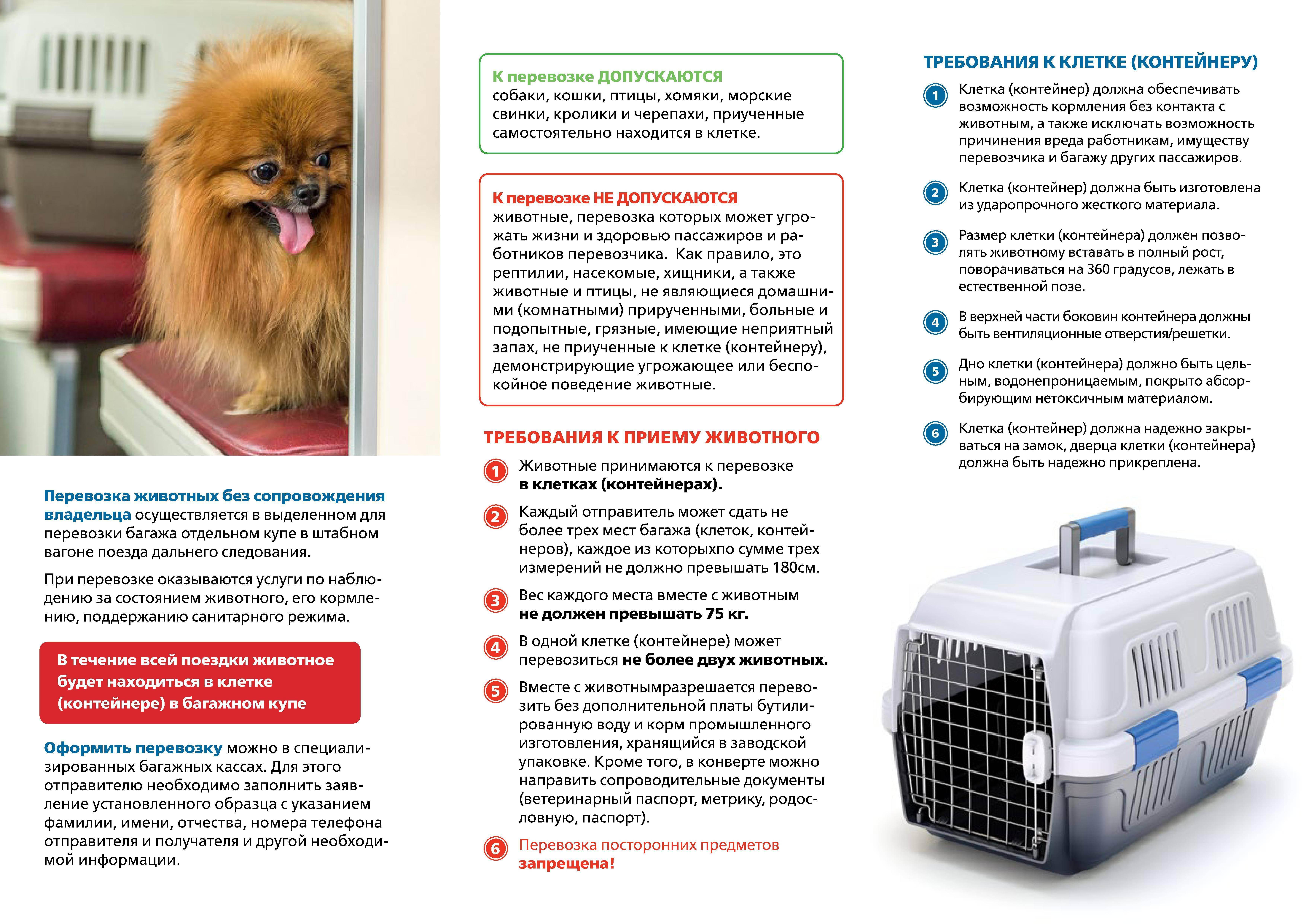 Правила перевозки кошек:: как перевезти кошку самолетом, поездом и на машине