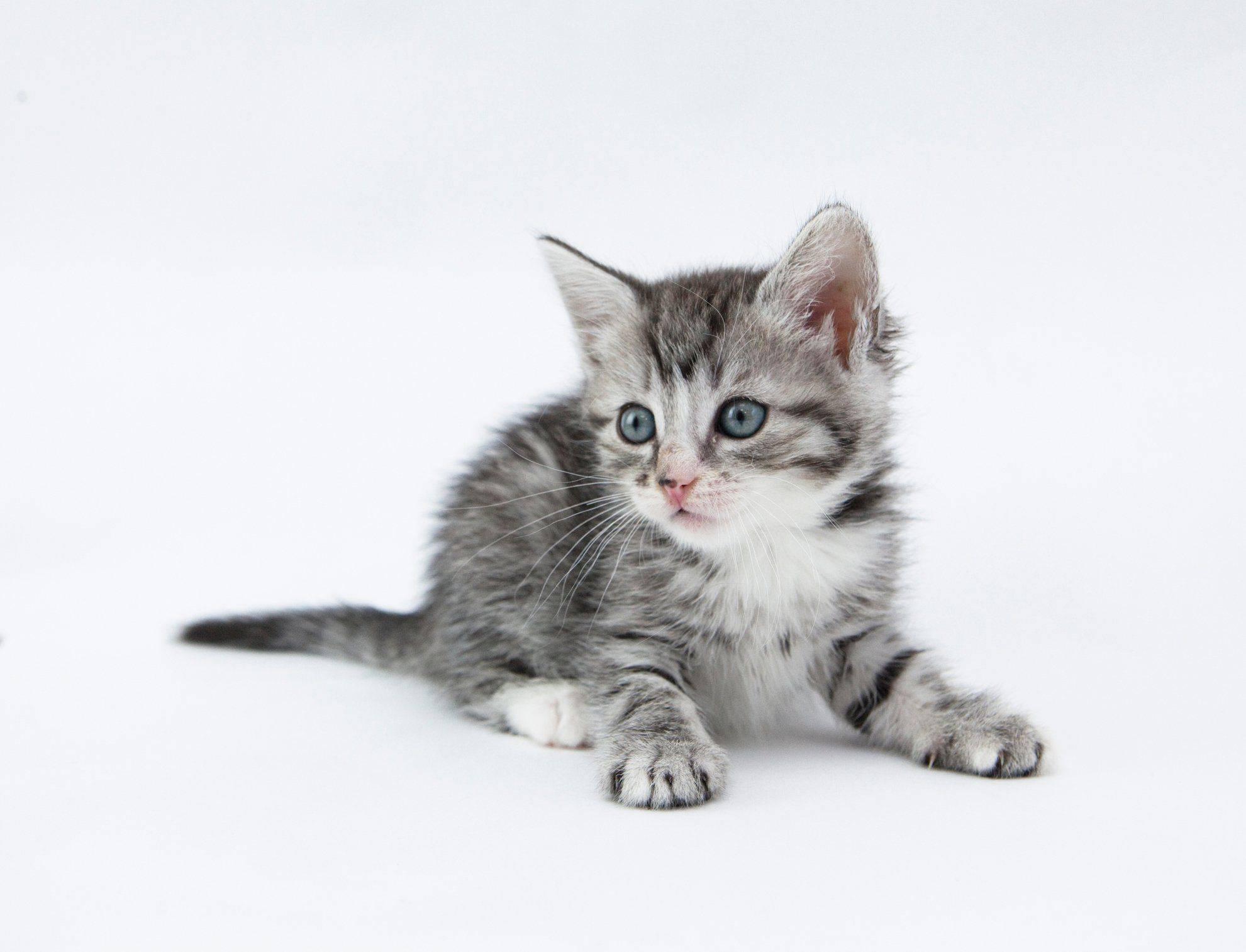 Оригинальные клички для рыжих котов и кошек