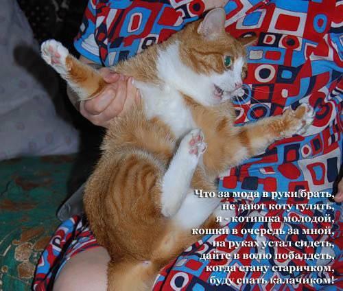 Как понять, что кошка просит кота, и как ее успокоить?