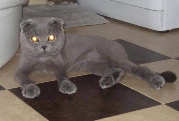 Домашний груминг кошек