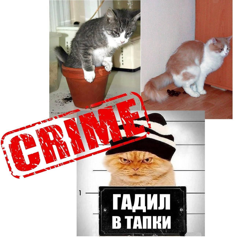 ᐉ пердят ли кошки, почему коты не пукают? - zoomanji.ru