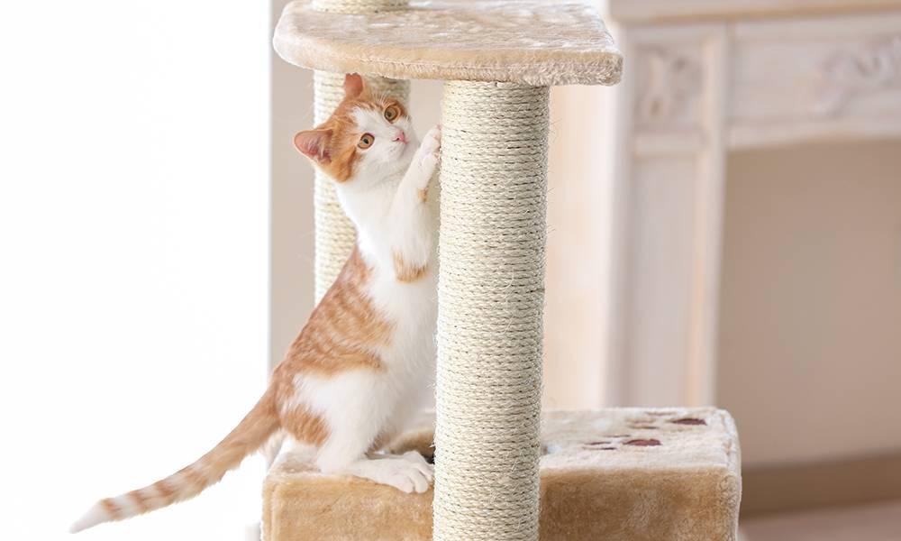 Как приучить котят и взрослых кошек к когтеточке