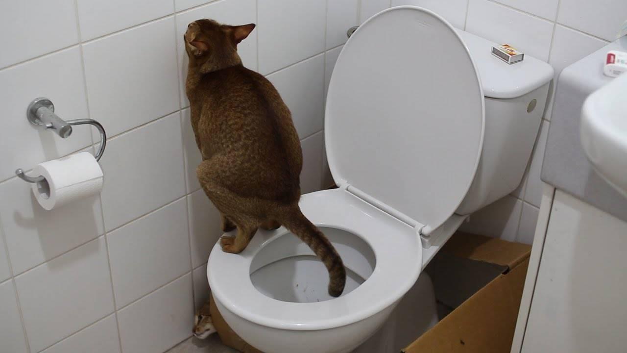 Как понять, что котенок хочет в туалет: по-большому или по-маленькому