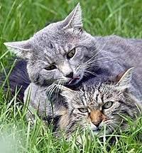 Можно ли кошкам сладкое или вкусовые пристрастия четвероногих