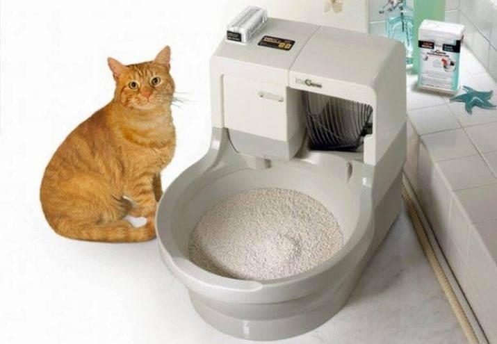 Кошачий лоток: всё, что нужно знать владельцу