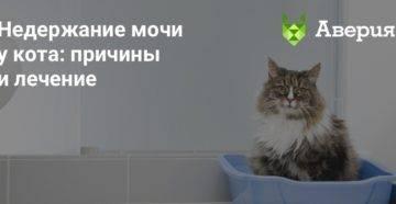 Недержание кала у кота: лечение, причины возникновения