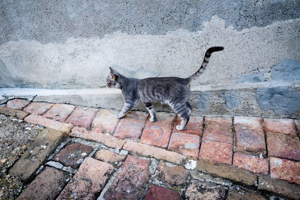 Что делать, если кошка загуляла первый раз - zhivomag