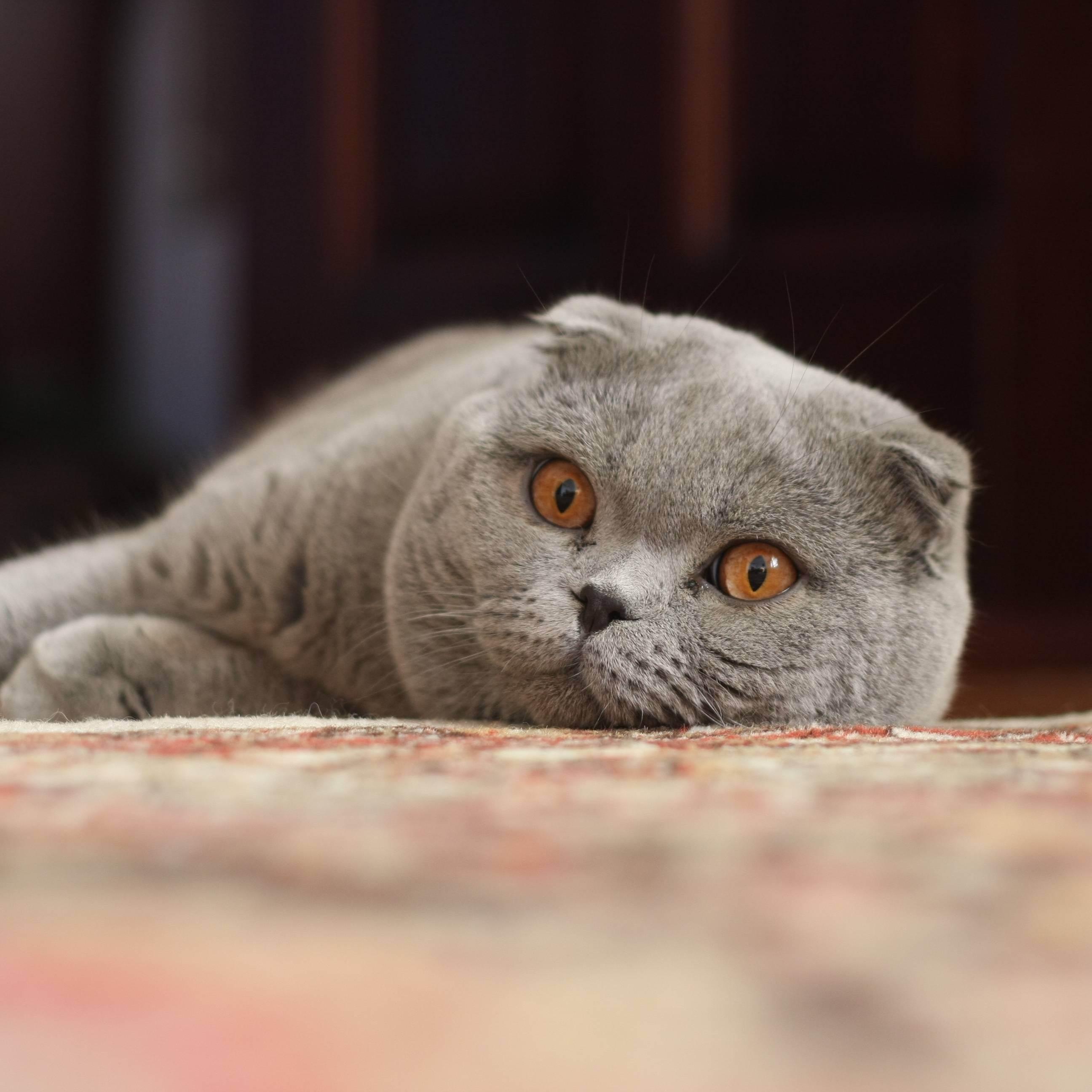 Топ-5 котов-крысоловов или кто лучше ловит крыс и мышей дома