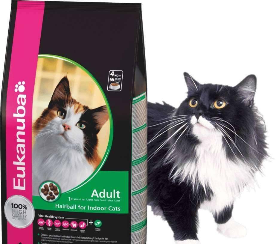 «эукануба» (eukanuba) корм для кошек: обзор, состав, ассортимент, плюсы и минусы, отзывы ветеринаров и владельцев