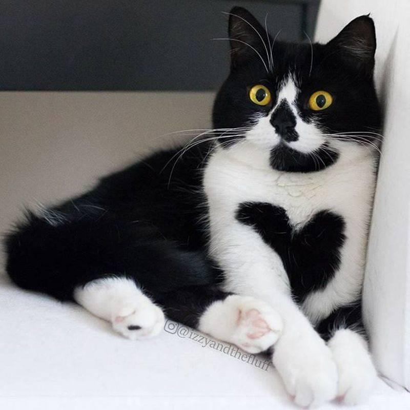 15 кошек с самым необычным окрасом - фото